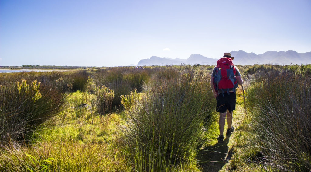 walking in the wetlands kleinmond