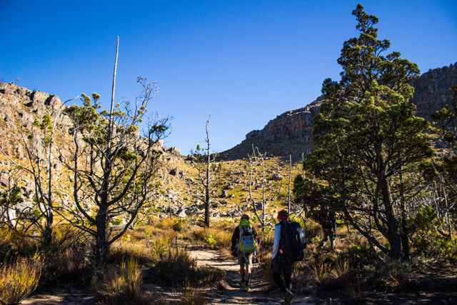 conquer the cape cedar forest cederberg long hike