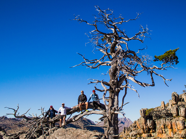conquer the cape cederberg cedar tree bonsai