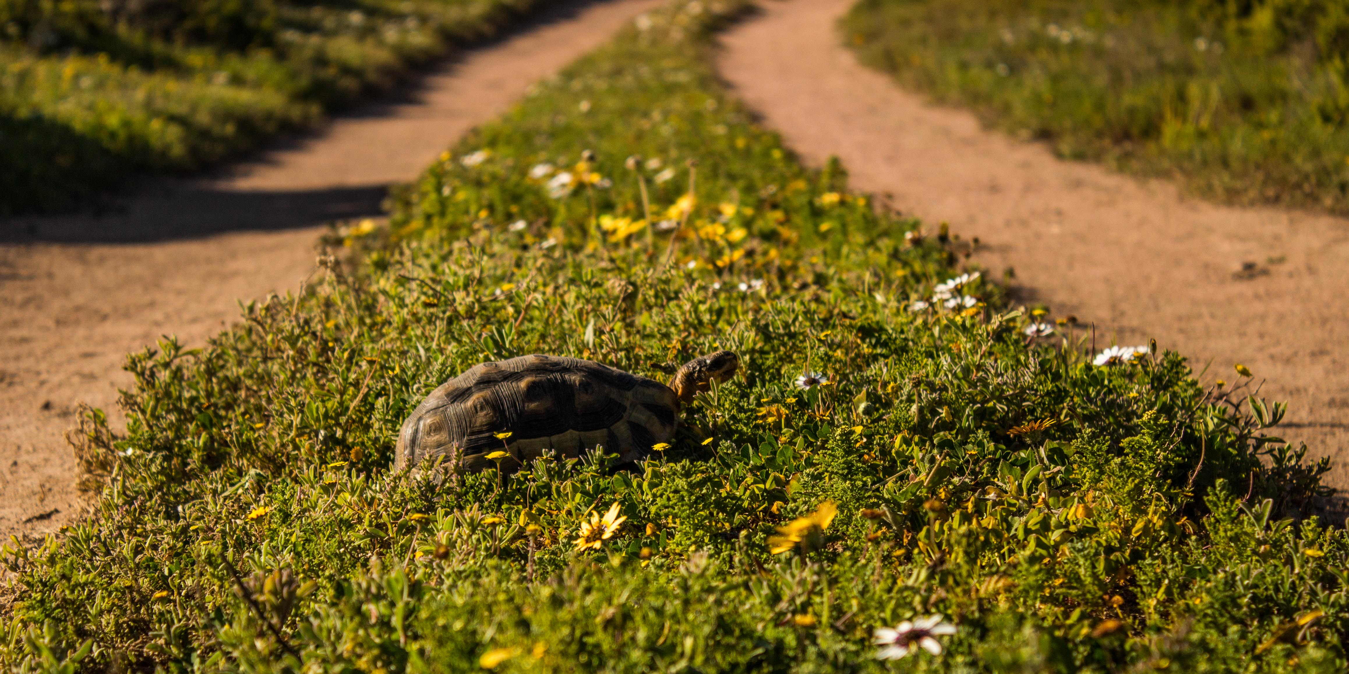PHOTOS: A Two-Day Walk In The West Coast Daisies